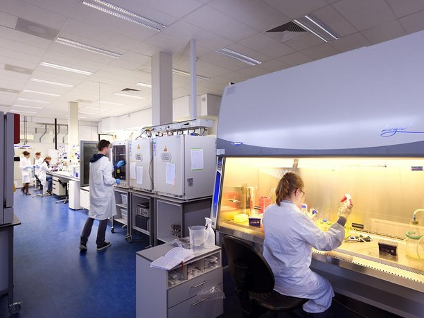 laboratory for Cell and Tissue Engineering, department of BioMedical Engineering, Eindhoven University of Technology
