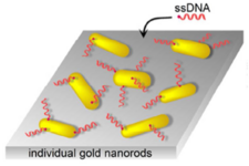 Heterogeneous kinetics in the functionalization of single plasmonic nanoparticles