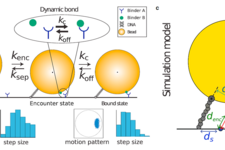Single-Bond Association Kinetics Determined by Tethered Particle Motion: Concept and Simulations