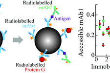 The Influence of Covalent Immobilization Conditions on Antibody Accessibility on Nanoparticles